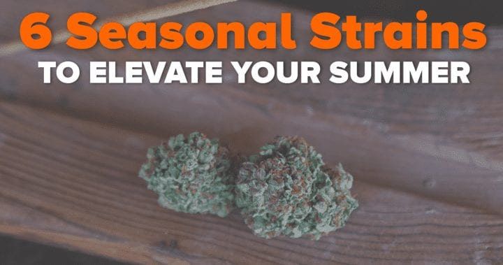 6 Seasonal Strains to Elevate Your Summer